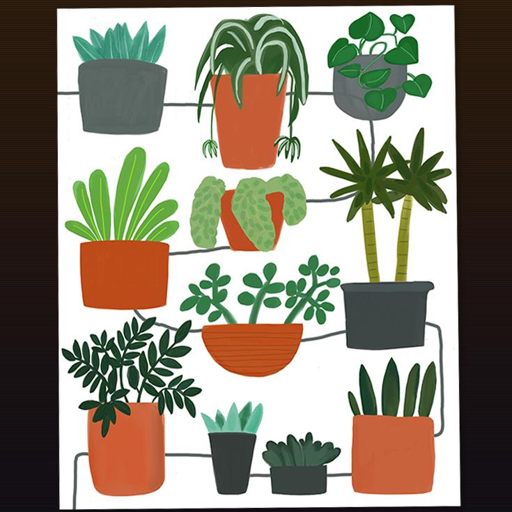 House Plants-web.jpg