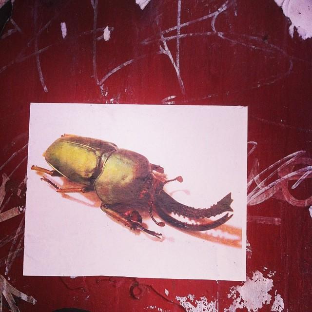 Prehistoric Pincers #streetart #brooklyn #nyc