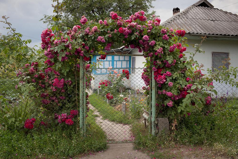 Roses44.jpg