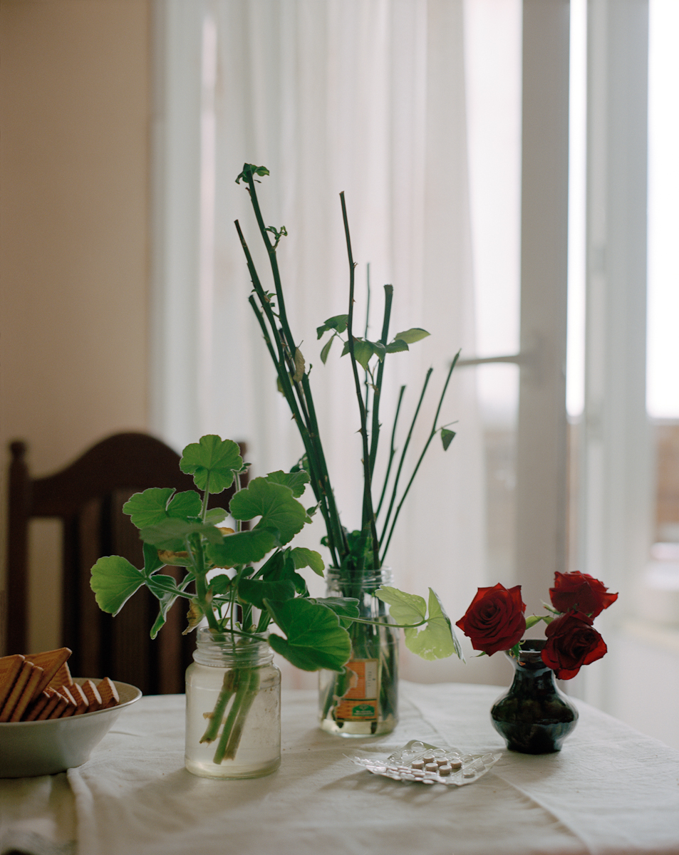 Roses46.jpg