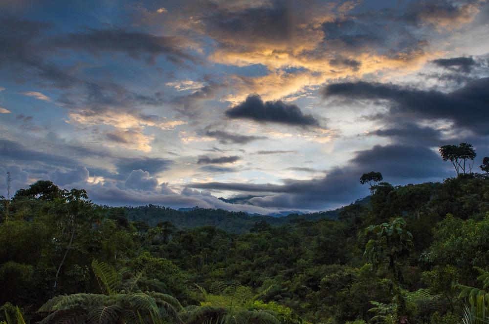 Amazon Forest, Ecuador