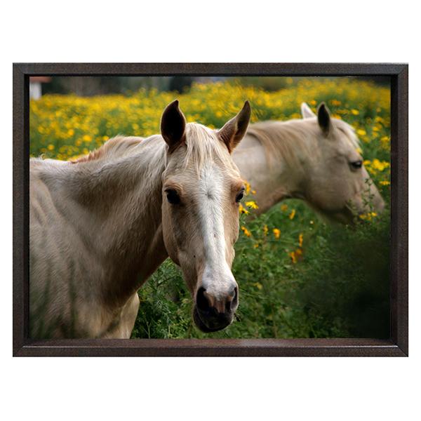 audio-horse-web.jpg