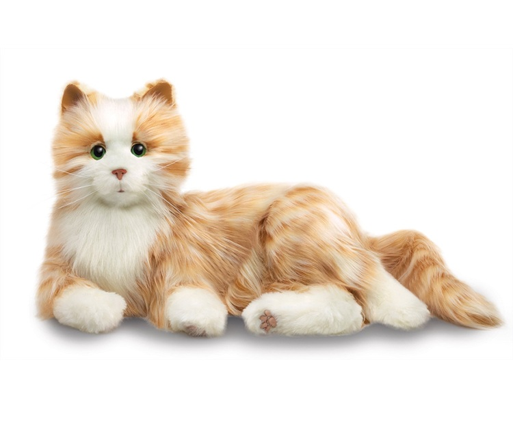 INT-Cat.jpg