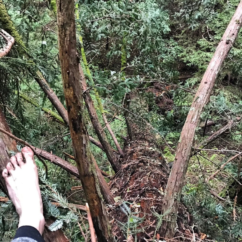 Yes, Aaron literally hikes barefoot!