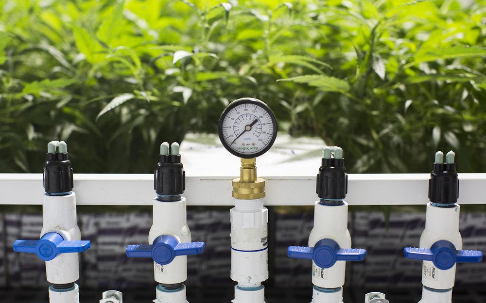 07-caliva-hydroponic-grow-11.jpg