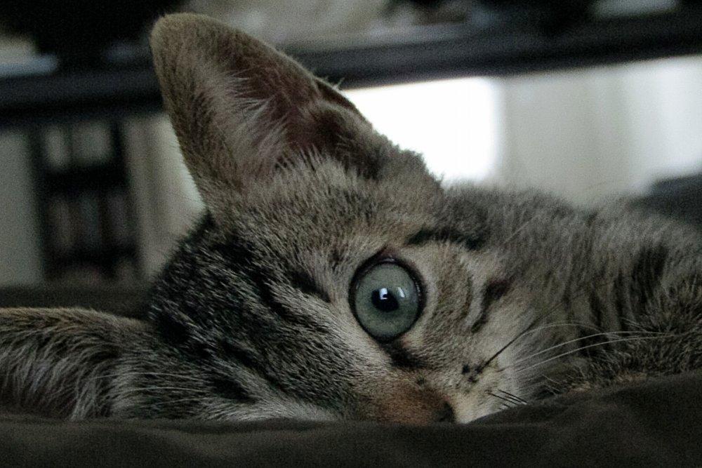 Avere-un-gatto