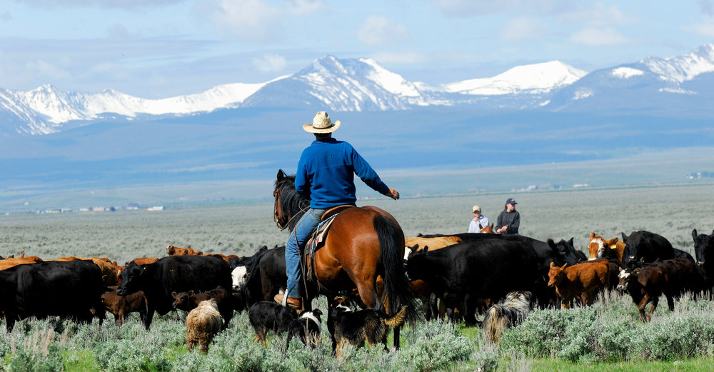 Banner-Photo-Cattle-Drive.jpg