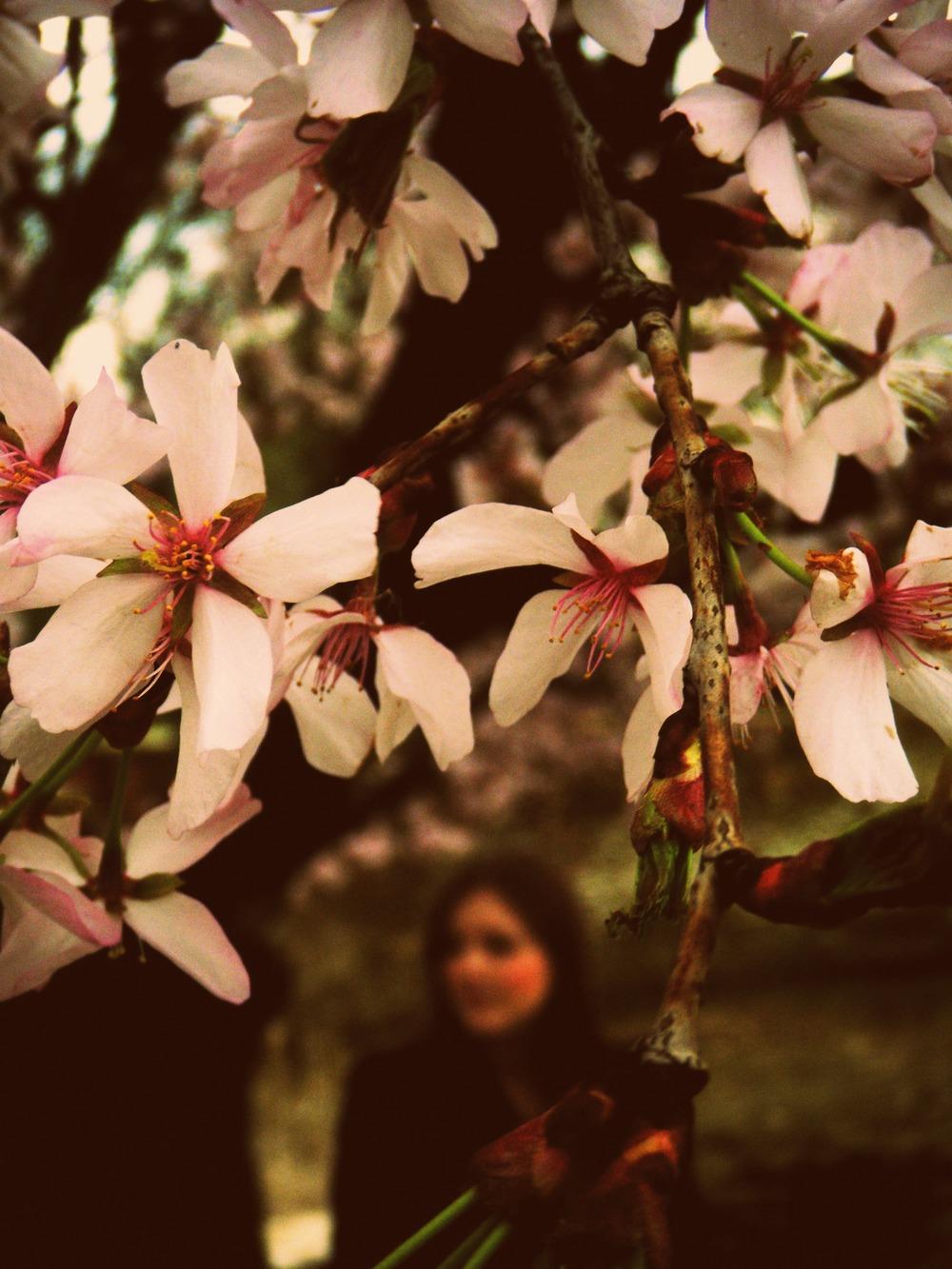 floralfridayblossom