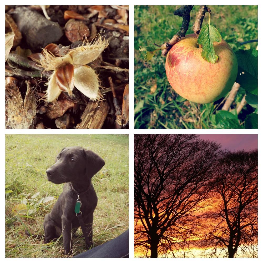 Autumn-2014-Creative-Countryside