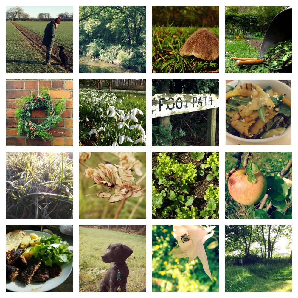 Green-Collage-Creative-Countryside