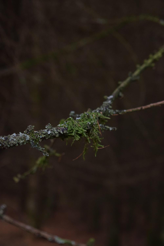 moss branch.JPG