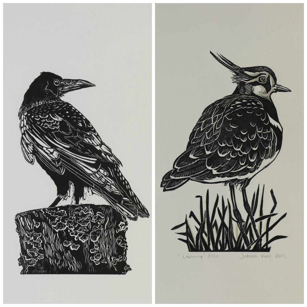 birds-vass.jpg