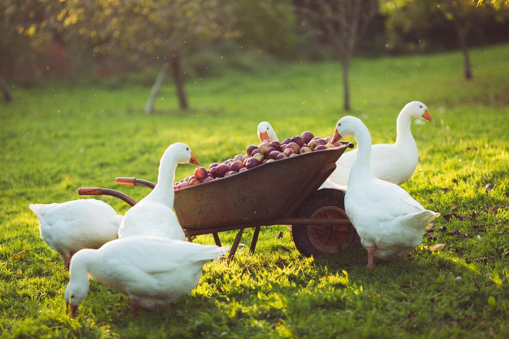 The Seasonal Table 4.JPG