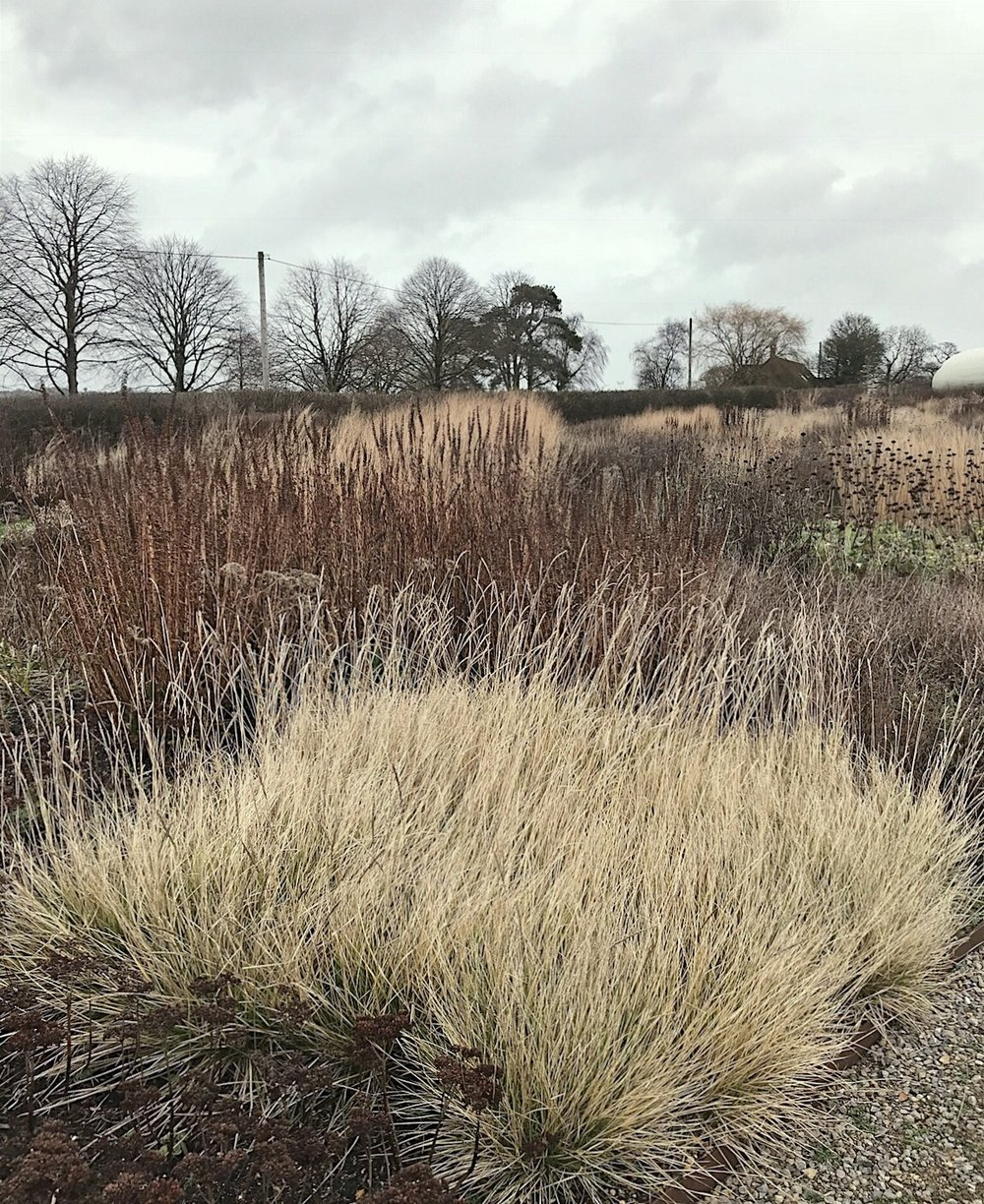 Prairie grasses in the Piet Oudolf garden