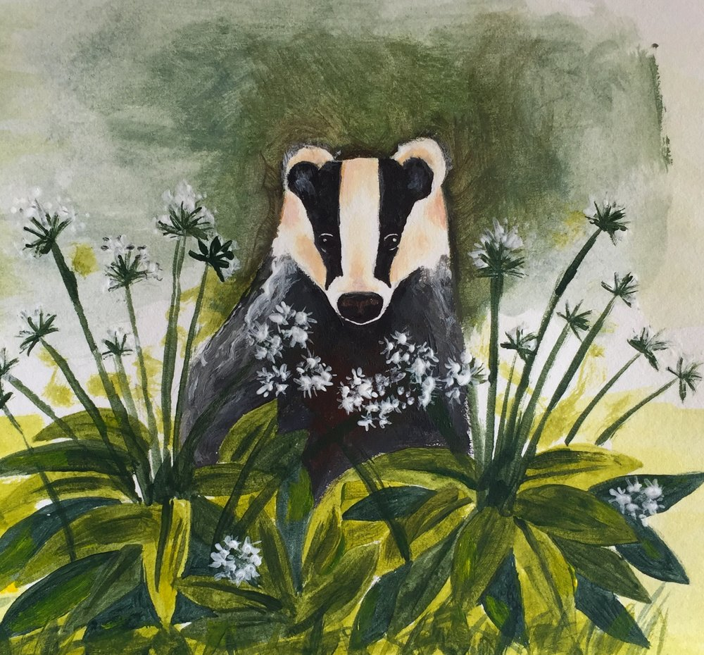 Badger in Wild Garlic.JPG