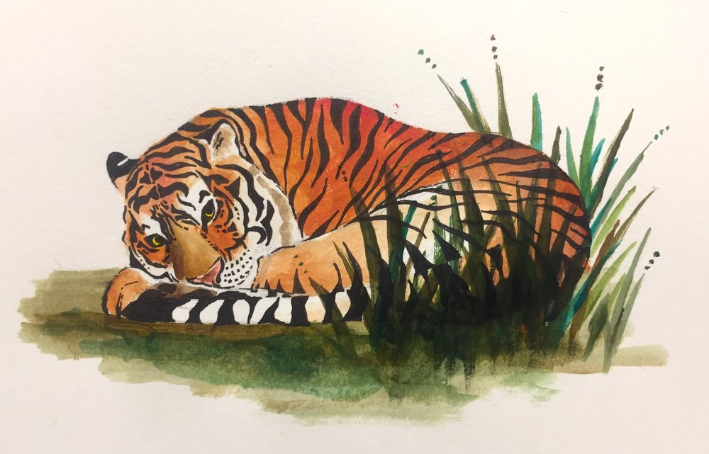 Tiger Snoozing.JPG