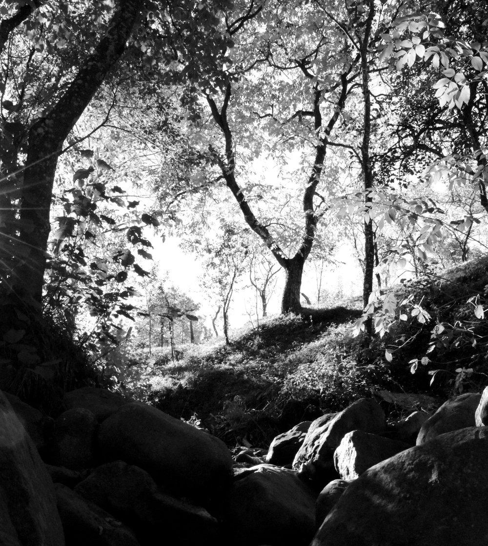 by the creek.JPG