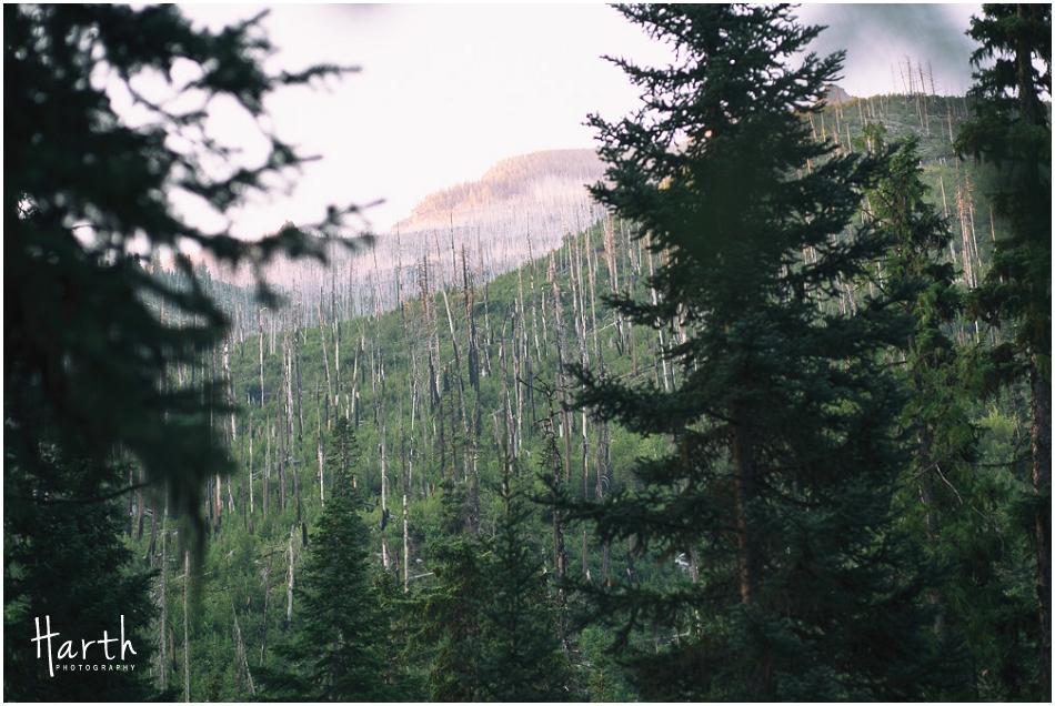 Remaining Hillside Trees