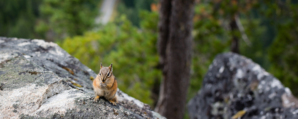 harth-photography-washington-chipmunk