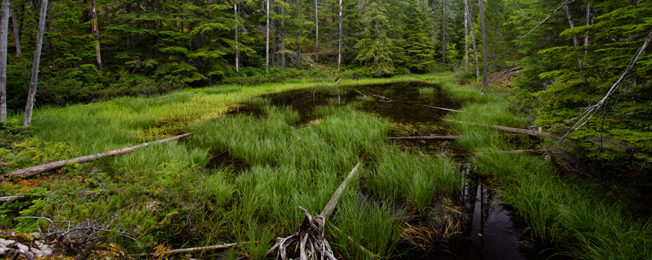 harth-photography-washington-pond