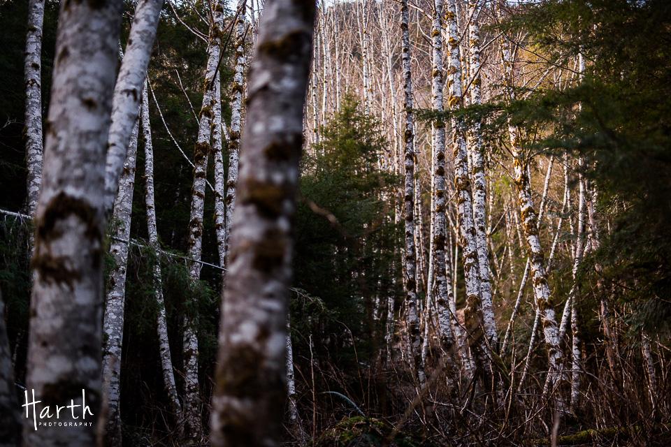 Barclay Lake Washington Trail