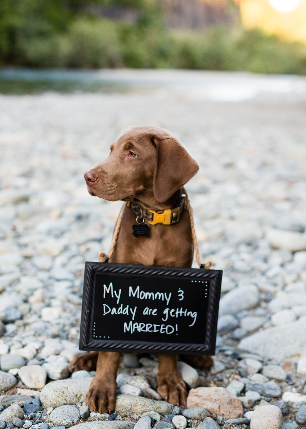 cutest puppies engagement photos