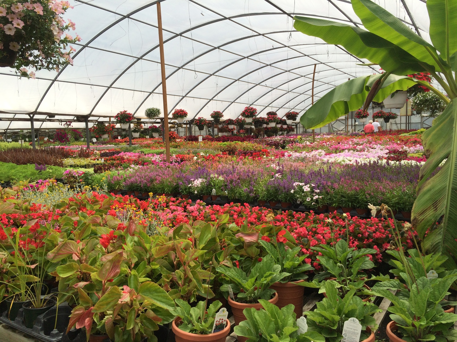 Annuals And Perennials Plant And See Nursery