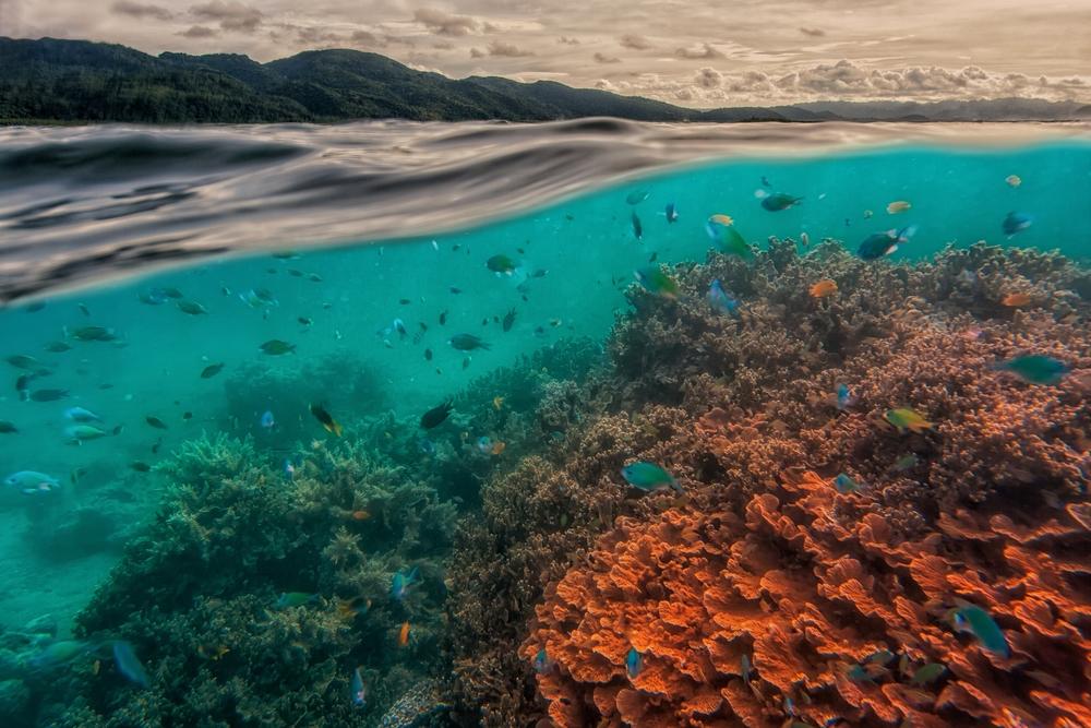 uri marine reserve