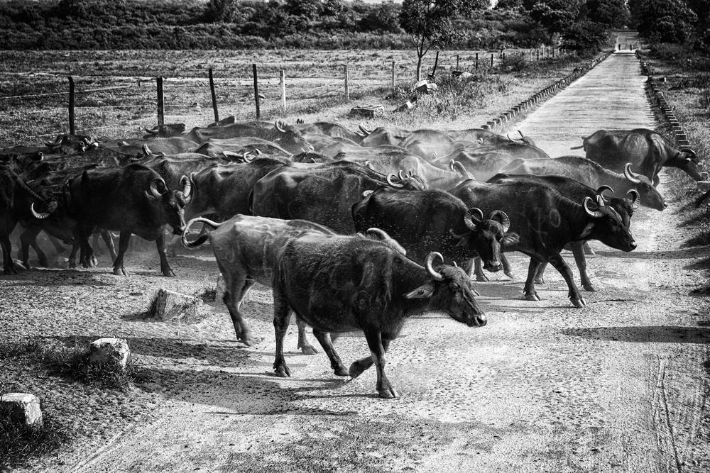 UDA WALAVE, SRI LANKA