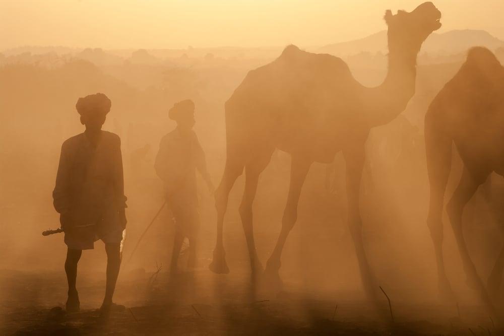 rajasthani shepherds