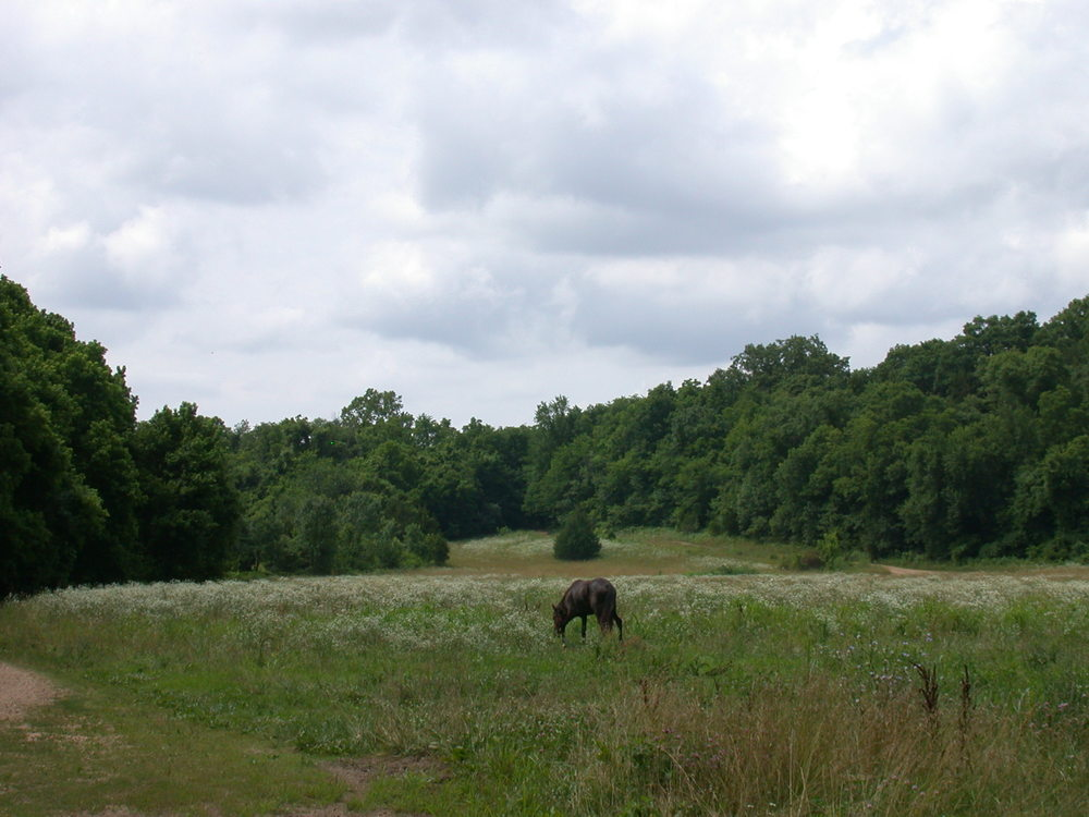 a view of the field at Bar K Wrangler Camp 8 site 35.JPG
