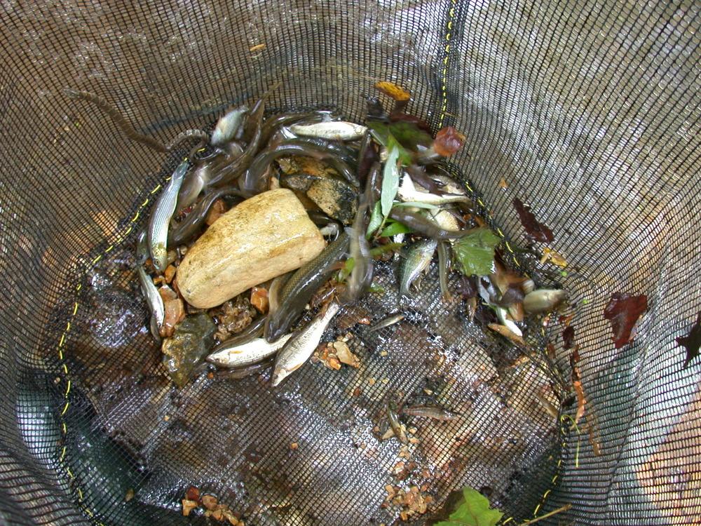 instream pen for fish site 44.JPG