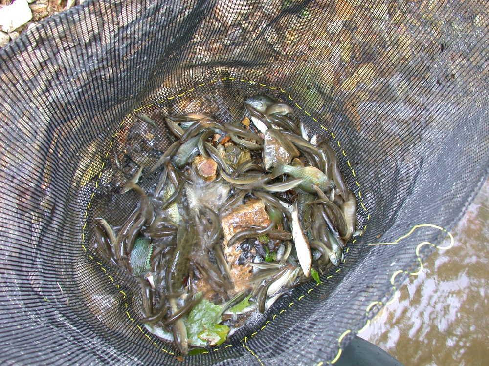 instream pen for fish-3 site 44.JPG