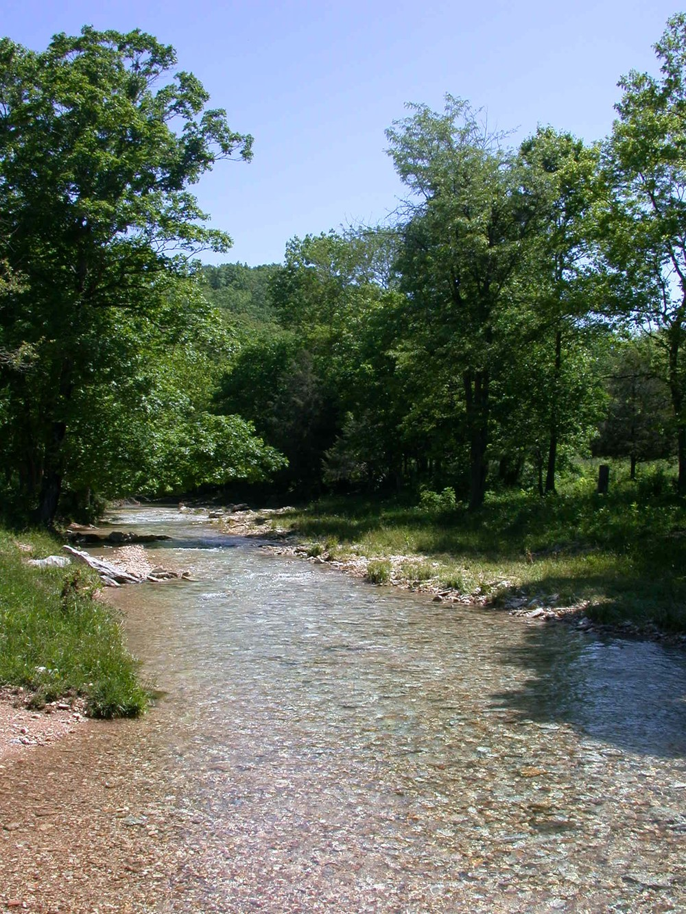 upstream from midpoint site 24 a.JPG