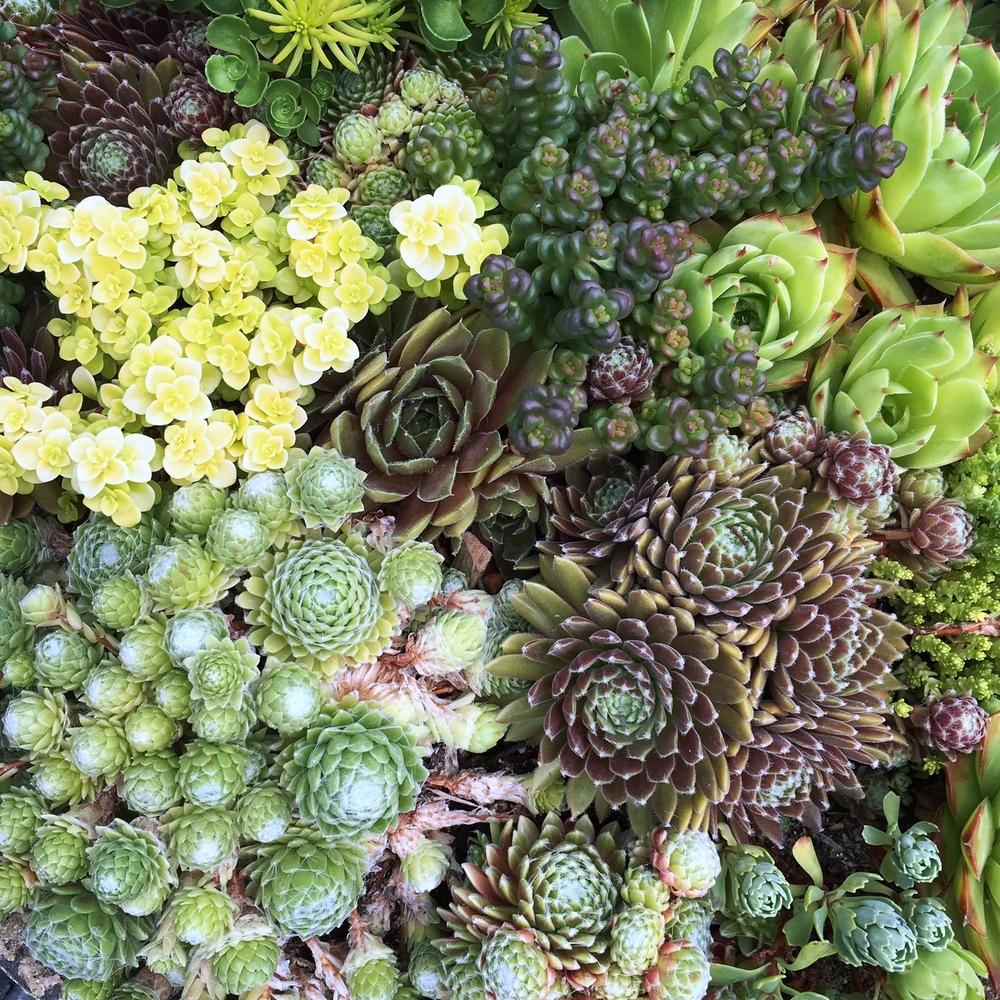 succulentssquished.jpg