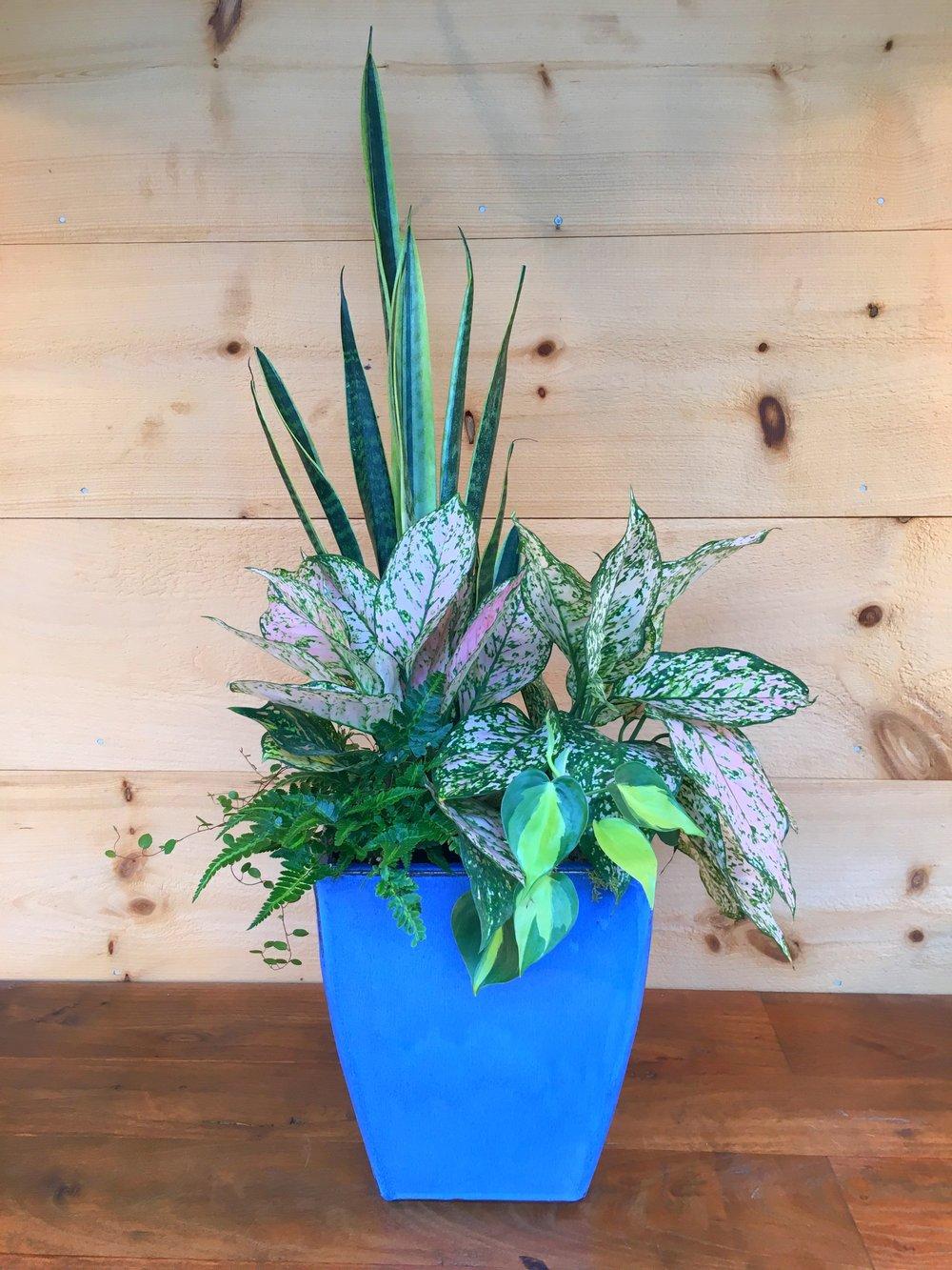 shadehouseplantswebsite.jpg