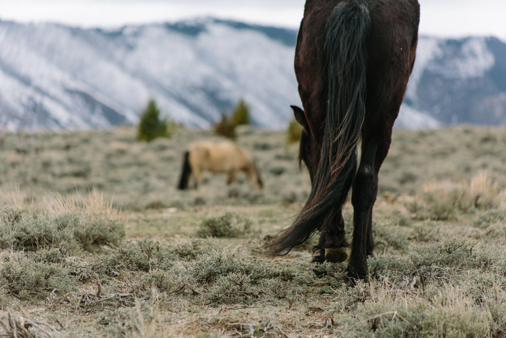 Montana_Wyoming_horses-52-BLOG-FB-INST.jpg