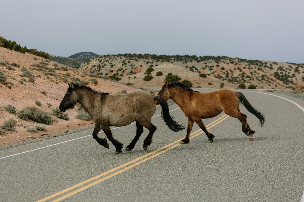 Horse power ;)