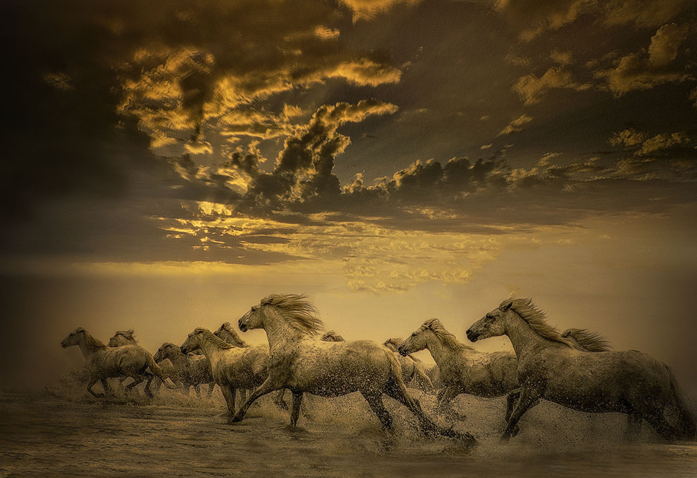 Sundown on the Camargue  Limited edition archival print  44 x 27