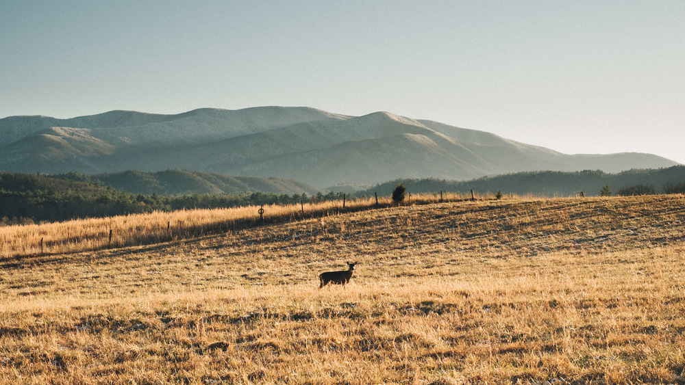 Cades Cove, Great Smoky Mountains, Tennessee