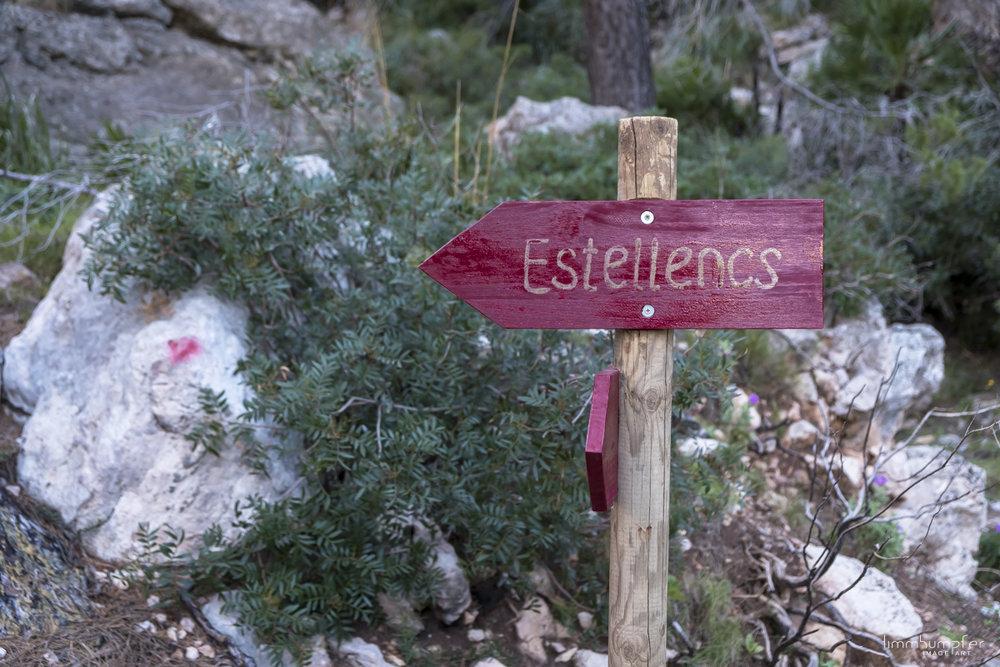 Wenige Meter nach Verlassen der Finca Ses Fontanelles biegt der Weg in den Wald.