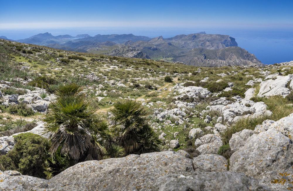 Vom Hochplateau unterhalb des Mola de s`Esclop reicht der Blick bis zurück nach Port d' Andratx. Wie nah 3 Wandertage Distanz doch aussehen können...