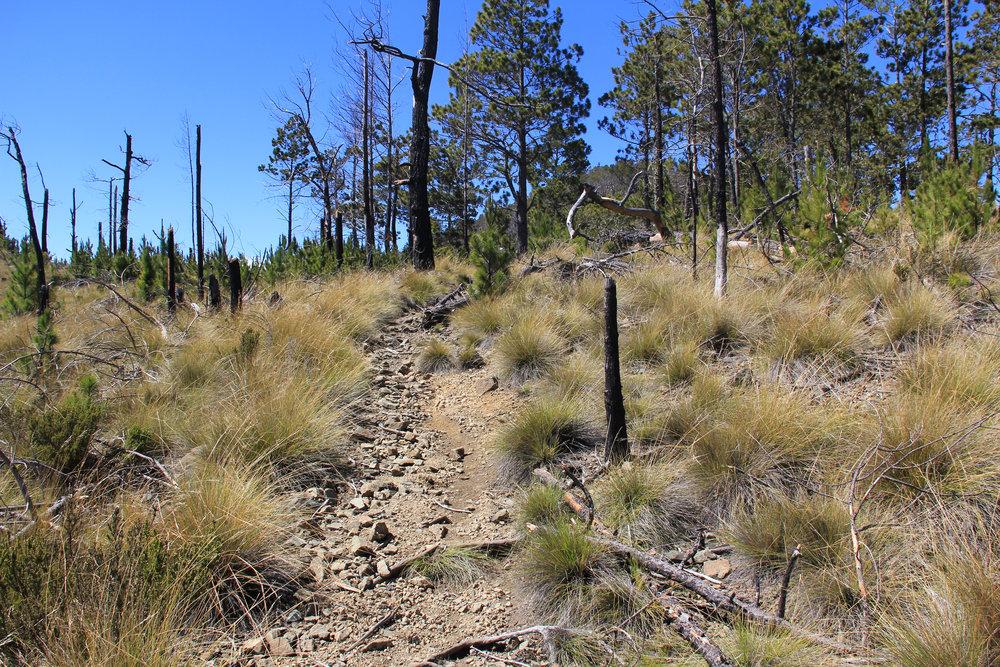 Der Gipfel nähert sich, die Vegetation wird spärlicher.
