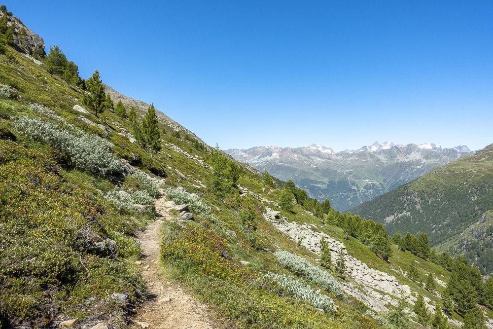 Sobald man den Wald verlässt, führt der Weg aussichtsreich am Hang entlang.