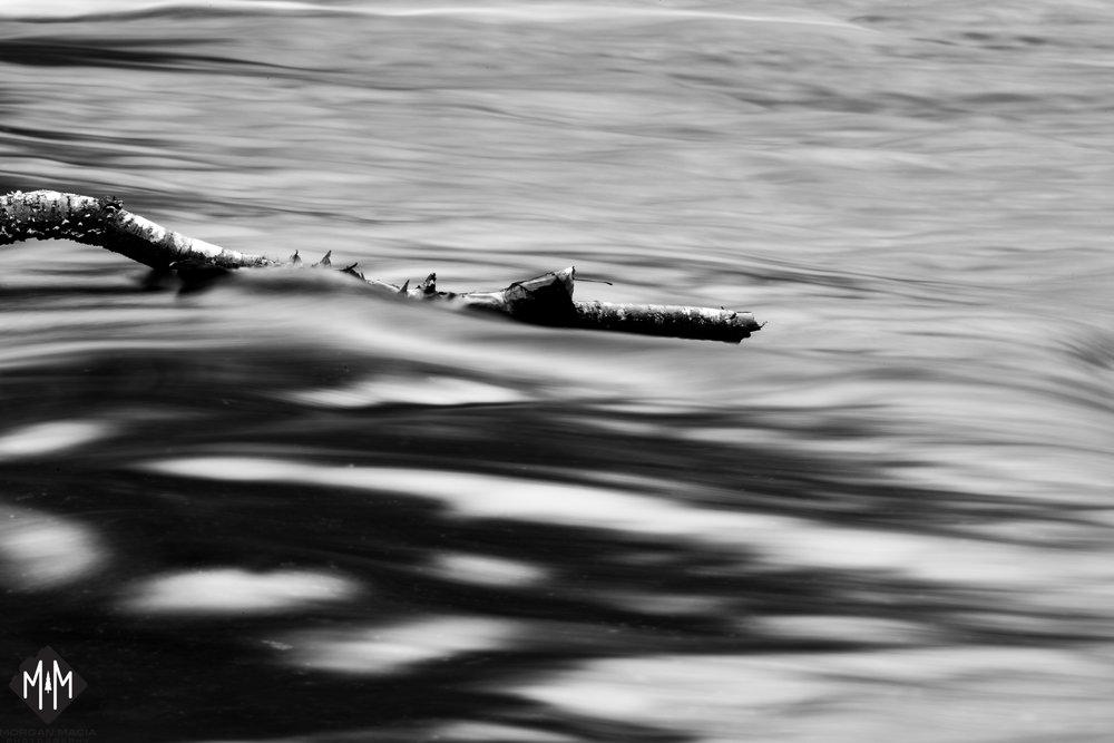 Log Water.jpg