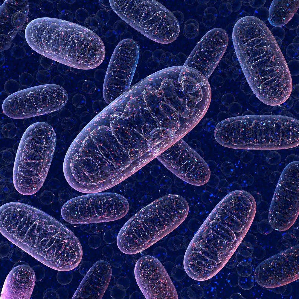 Bioenergetics + Metabolism