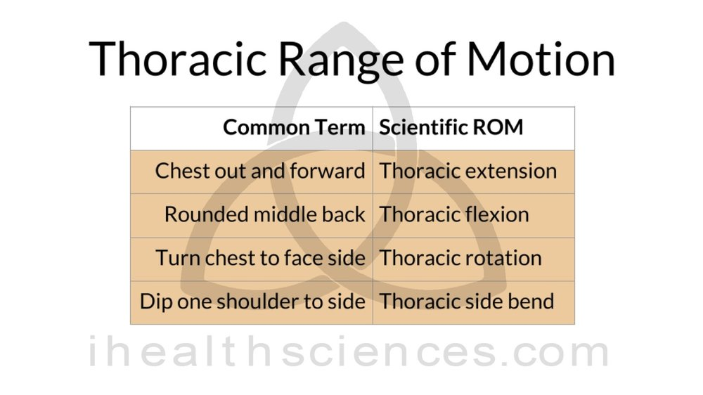 ROM 2 thoracic.png