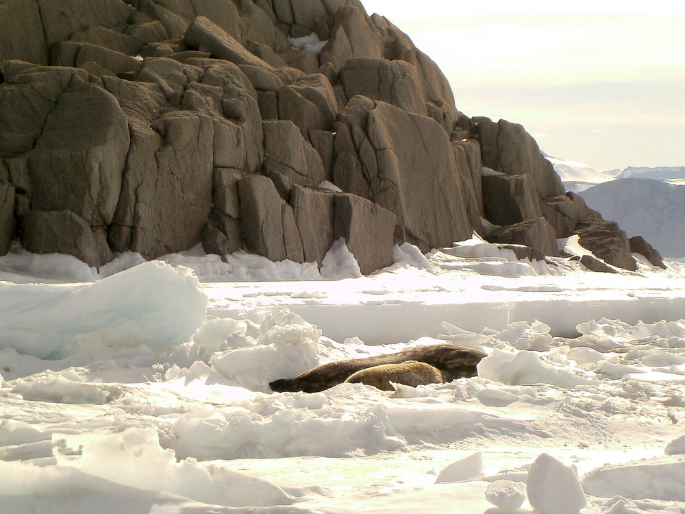 Granite_Harbor_Seals_Rocks.JPG
