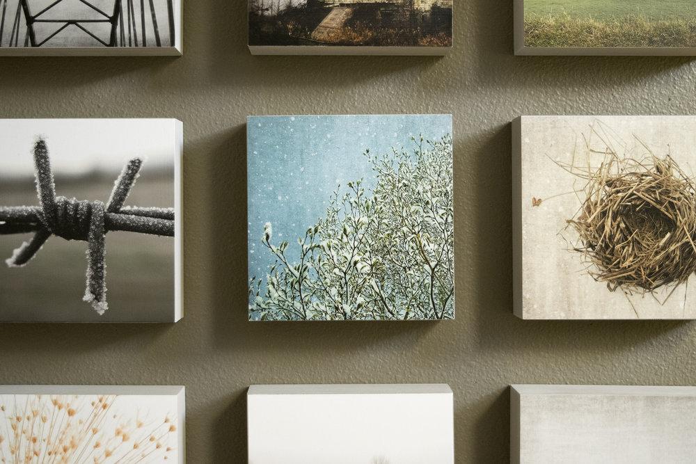 wall_magnoliasnow.jpg