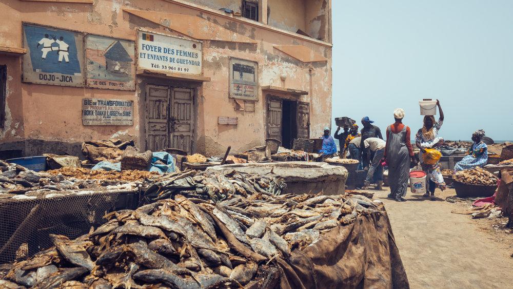 Senegal-16-9-31.jpg